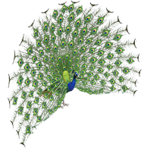Indian Peafowl (Aurora Designs)