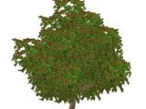 Apple Tree (Z-Studio)