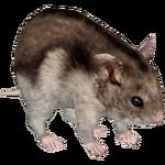 Djungarian Hamster (Tamara Henson)