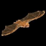 Eastern Red Bat (Batty)