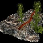 Ambient Scolopendra (Zerosvalmont)