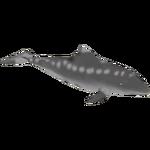 Aetiocetus (Braq & Dinosaur)