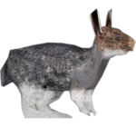 Eastern Cottontail (Black Canis Lycan)