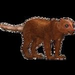 Dwarf Mongoose (Zoo Admin Design Team)