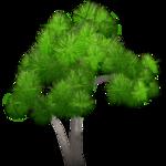 Cabbage Tree (Artifex)