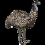 Emu (Eryel & Maximilian)