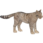 European Wildcat (HENDRIX)/Version 1