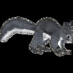 Abert's Squirrel (MiBound)