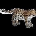 Amur Leopard (Lgcfm & Zebrasorus)