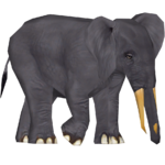 African Forest Elephant (Mjmannella)