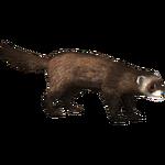 European Polecat (Ulquiorra)