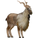 Markhor (Demon Hunter)