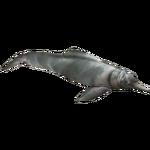 Araguaian River Dolphin (Eryel & Zerosvalmont)