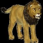 Asiatic Lion (Tamara Henson)
