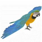 Blue and Yellow Macaw (Rosella & Thom)