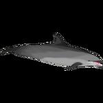 Black Sea Bottlenose Dolphin (ObsidianAngst)