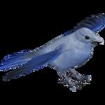 Blue-gray Tanager (Bunteriro)