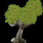 European Rowan (HENDRIX)