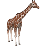 Reticulated Giraffe (Aurora Designs)