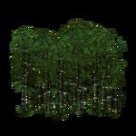 Black Bamboo (Fauna)
