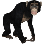 Chimpanzee (Aurora Designs)