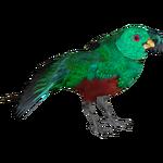 Crested Quetzal (Dedennedillo)