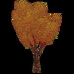Fall Maple (Z-Studio)