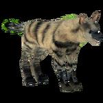 Aardwolf (Hispa Designs)