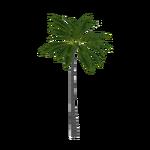 Arikury Palm (Fauna)
