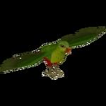Australian King Parrot (Tamara Henson)