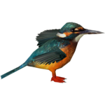 Common Kingfisher (Zerosvalmont)/Version 1