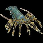 Ambient Reef Lobster (Zerosvalmont)