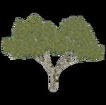Rhododendron (ZTABC Team)