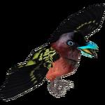 Banded Broadbill (MiBound)
