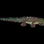 Banded Day Gecko (Terrena Laxamentum)