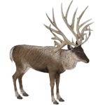 Bush-Antlered Deer (Lgcfm & Ulquiorra)