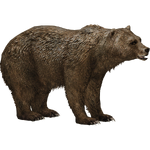 Grizzly Bear (JimmyzHoopz)