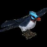 Azure-Winged Flycatcher (Tamara Henson)