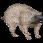 Bobak Marmot (Tamara Henson)