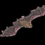 California Leaf-Nosed Bat (LilyValley)
