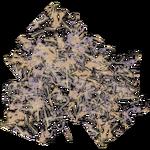 Terrain Plankton (Mjmannella)
