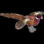Common Pheasant (Ulquiorra)
