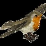 European Robin (MiBound)