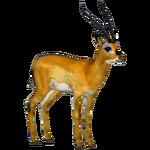 Black-Faced Impala (Tamara Henson)