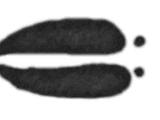 Artiodactyla (ZTABC)