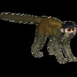 Black-capped Squirrel Monkey (Deerfad)