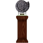 Ammonite Fossil Display (Zhadow)