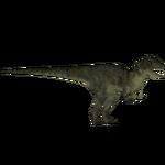 Allosaurus (Tyranachu)/Version 1