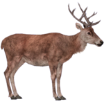 Red Deer (HENDRIX)