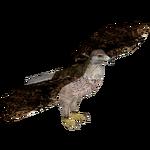 Bonelli's Eagle (Bahia46)